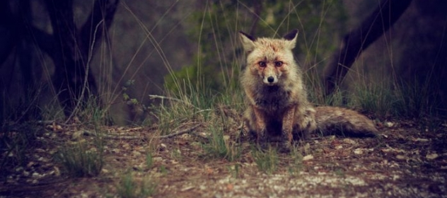 5 Ways to Outfox Your Competitors with Pay-Per-Click Advertising